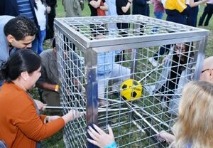 The Cage Game
